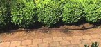 How to Install a drip irrigation system using your existing traditional sprinklers