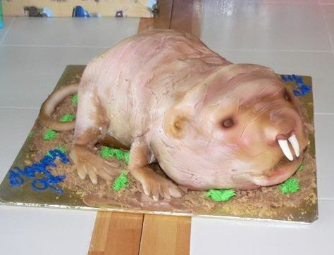 How About a Bite of Naked Mole Rat?