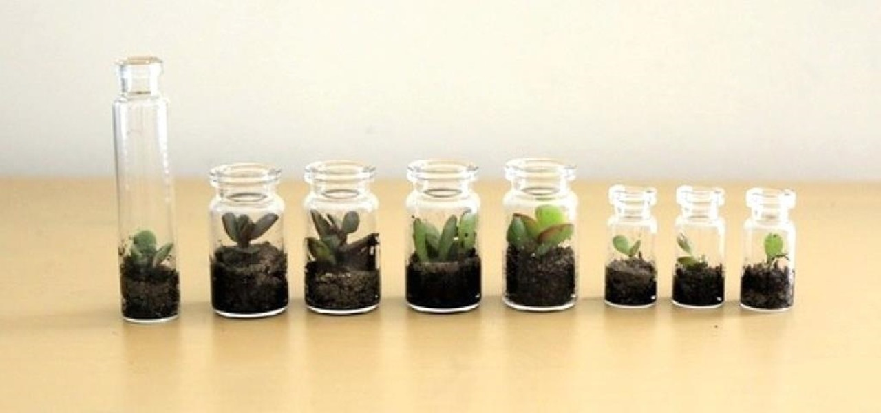 Teeny Tiny Winter Terrariums
