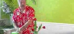 Arrange a Valentine's tulip vase for your home