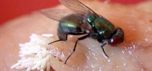 Control flies around your home