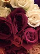 blanc rose