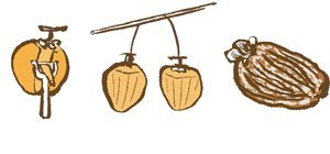 Make Hanging Dried Persimmons (Hoshigaki)
