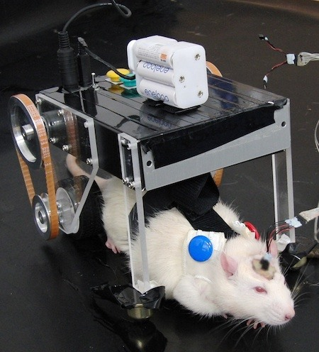 Evil Mad Science Produces Frankenstein RatCar, Rat-Robot Hybrid