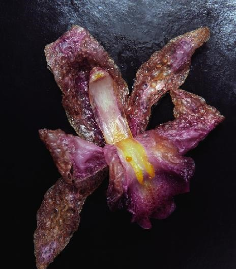 Deep Fried Flowers (For Art, Not Eating)