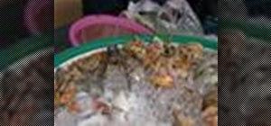 Make aThai street vendor style mussel pancake