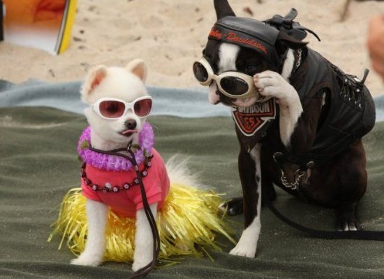 """Believe It Or Not, These Dogs Are """"Serious"""" Surfers"""