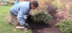 Lay down mulch for new plants in the winter