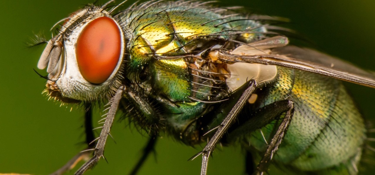 Bloodsucking Flies Act as 'Flying Syringes' to Detect Malaria & Other Emerging Diseases in Wild Animals