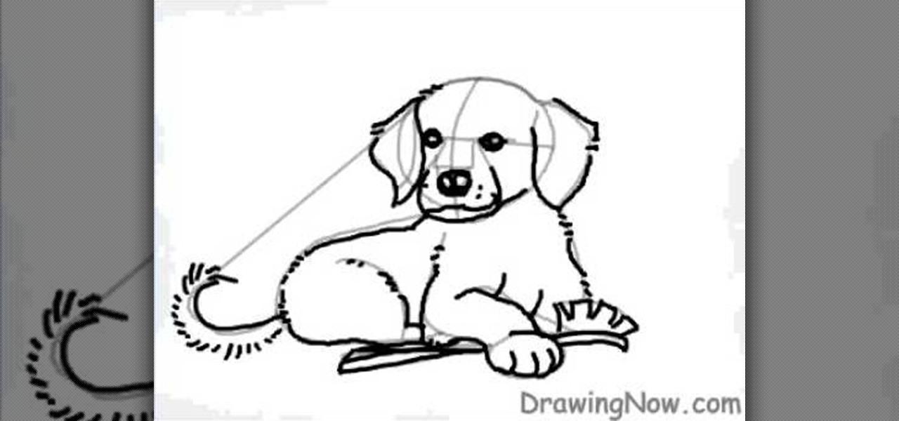 How To Draw A Cartoon Golden Retriever Puppy Dog | Auto Design Tech