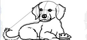 Draw a cartoon golden retriever puppy dog