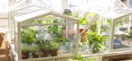 Food Tool Friday: Grow Fresh Herbs & Veggies Indoors with a Tabletop Greenhouse
