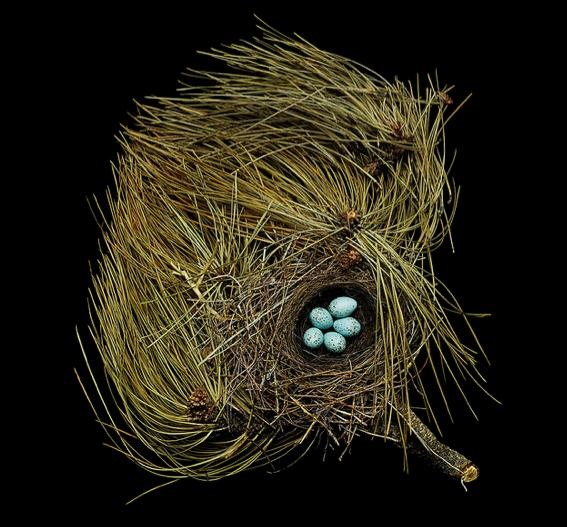"GIVEAWAY: ""Fifty Nests and the Birds that Built Them"" (NOW CLOSED)"