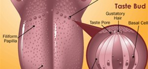 The Workings of The Tongue