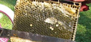 Extract fresh honey from a beehive