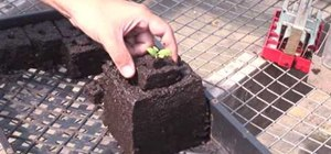 Use soil block makers to start seeds
