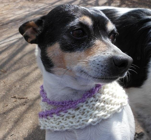How to Knit a Mobius Dog Scarf   Knitting & Crochet