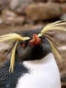 badass pinguin