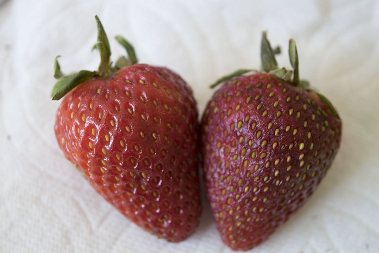 Image result for expired vs fresh strawberry