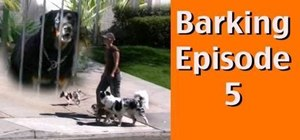 Get your dog to stop barking at other dogs behind fences