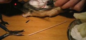 Taxidermy a dead rat and add bright red LED eyes