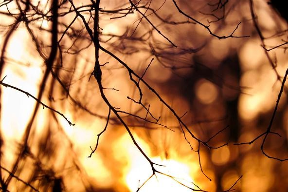 Bokeh Photography Challenge: Through the Branches