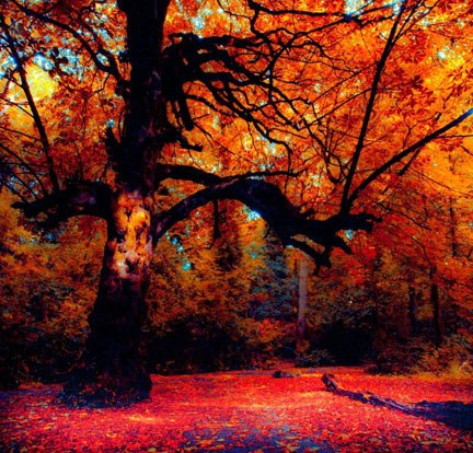 Get Inspired! 30 Examples of Vibrant Color Photography ...