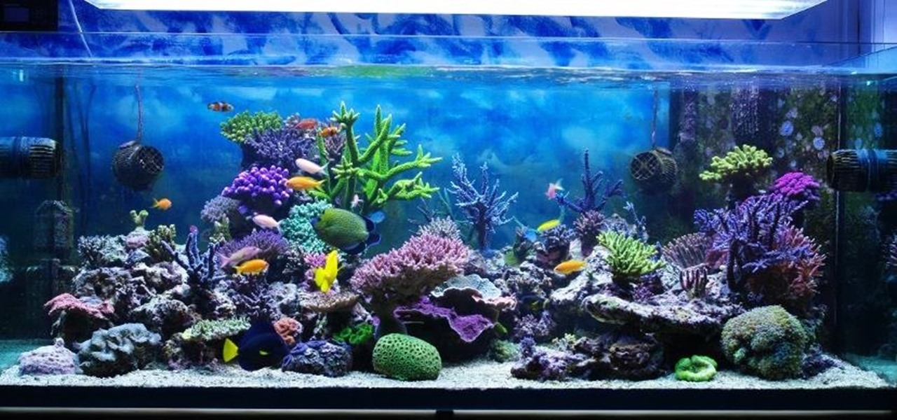 cheap and simple aquarium built pet wonderhowto