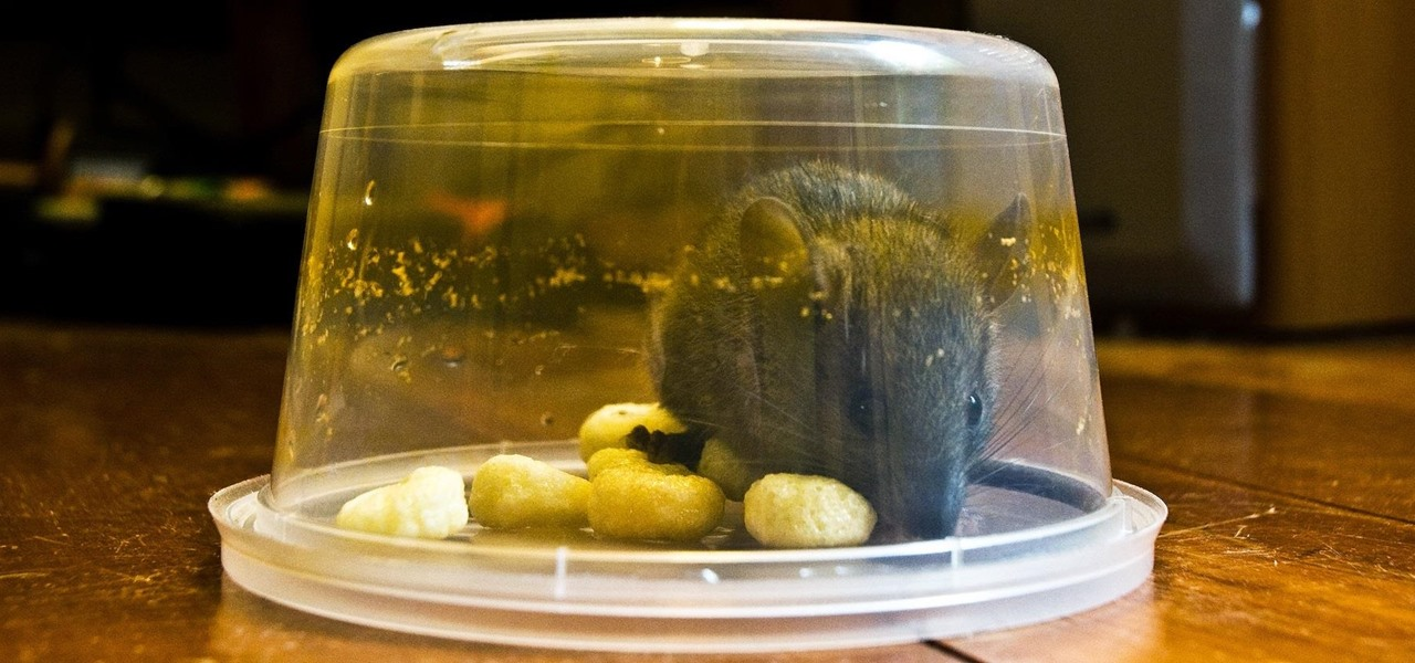 5 Clever Ways to Make a Simple No-Kill Trap for Mice & Rats