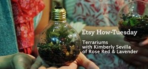 Craft a pretty light bulb terrarium
