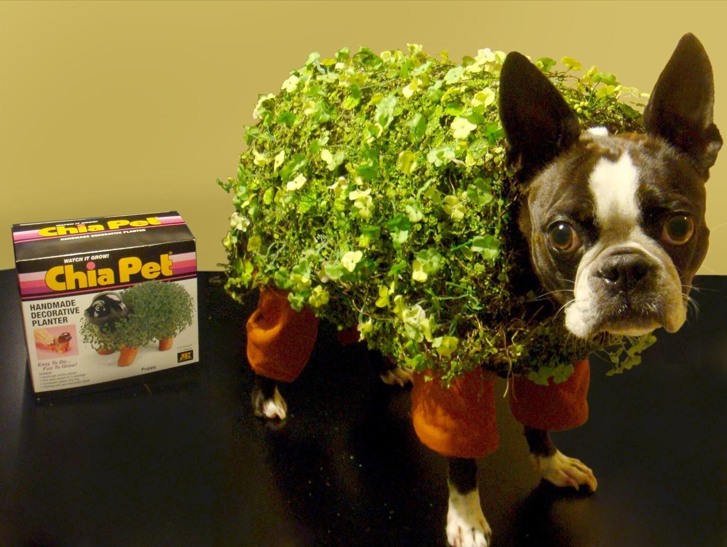 Chia pet pet costume plus 9 more adorable diy halloween costumes image via gobblegreen solutioingenieria Choice Image