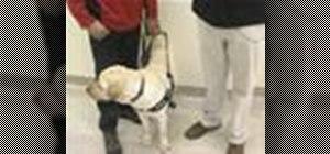 Train a guide dog