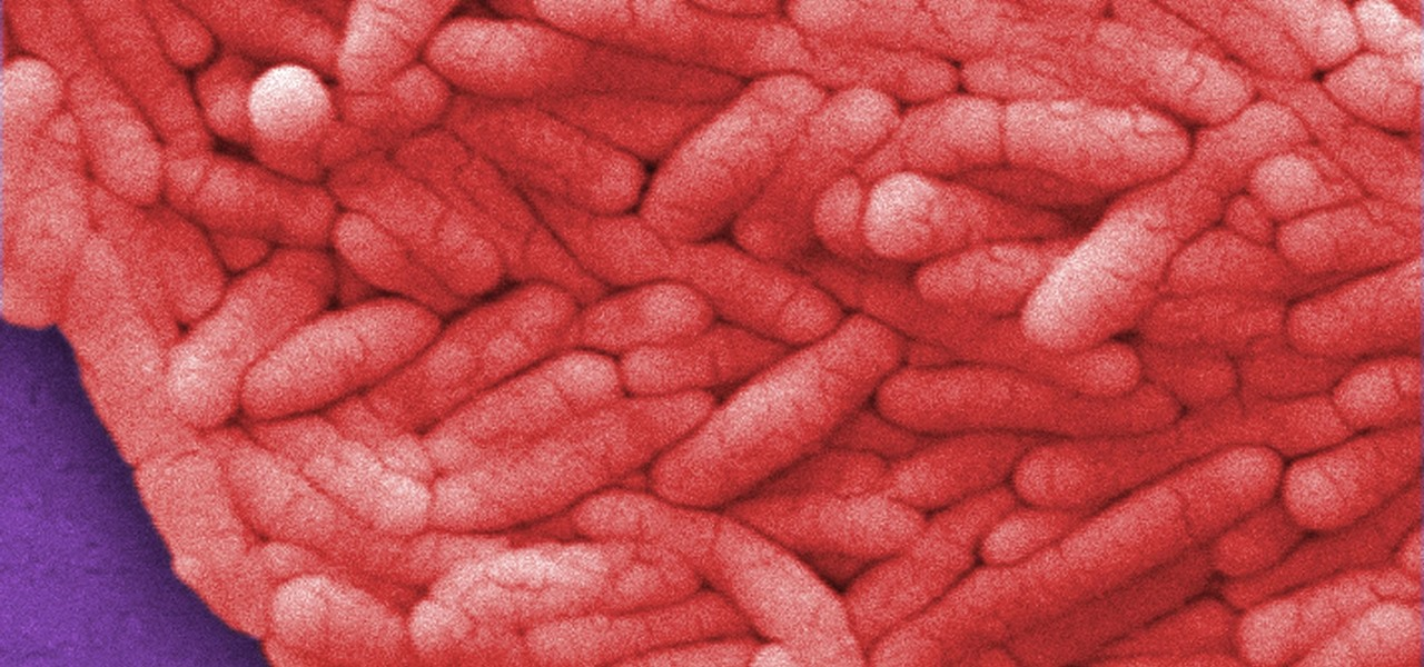 New 'Trojan Horse' Salmonella Bacteria Kills Tumors Instead of Making You Sick