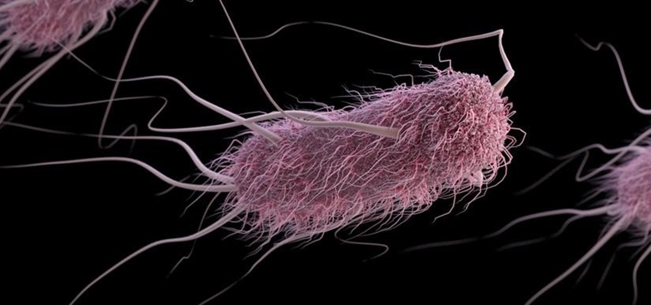 Student Team Gives Dangerous E. Coli a New Role as Bacteria Detective