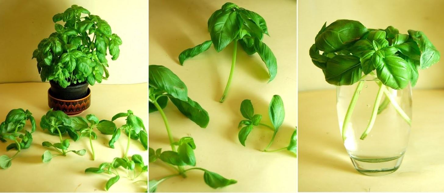 10 Vegetables & Herbs You Can Eat Once & Regrow Forever