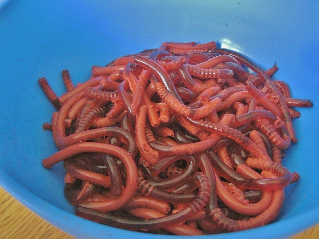 Halloween Food Hacks: How to Make Bloody Jello Worms the Right Way ...