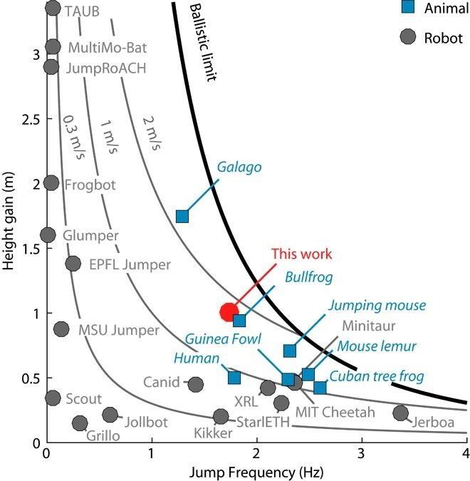 Bush Baby Inspires UC Berkeley's Record-Breaking Leaping Robot