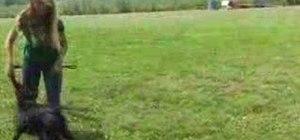 Clicker train a dog to heel