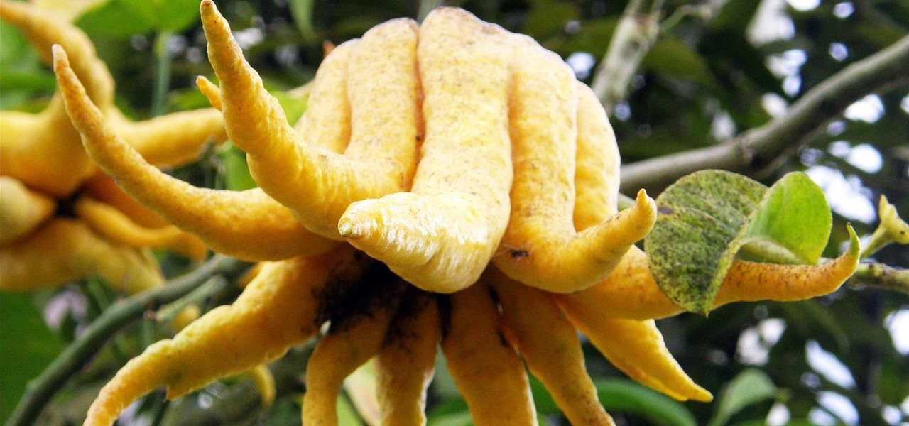 Get Enlightened with a Buddha's Hand Citron