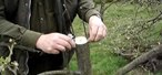 How to Rind graft an apple or pear tree