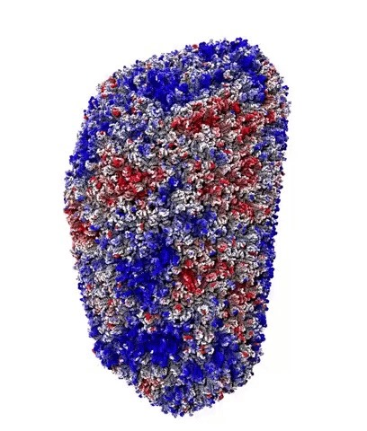Supercomputer Visualization Shows 1.2 Microseconds in the Life of a 4-Million-Atom HIV Capsid