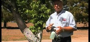 Add zinc to pecan trees