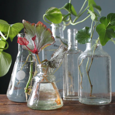 Propagate! HowTo: Make Many Plants From One