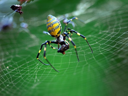 Get Inspired! 30 Otherworldly Examples of Insect Photography