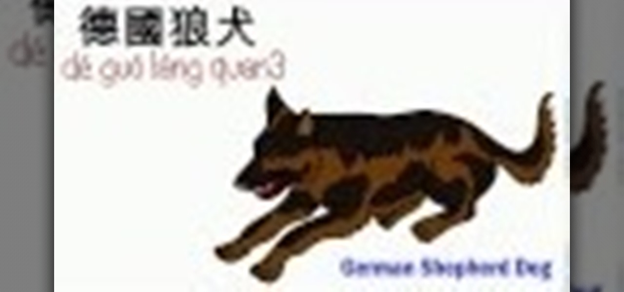 Mandarin Lesson - Animal Vocabulary - Dog Series #1