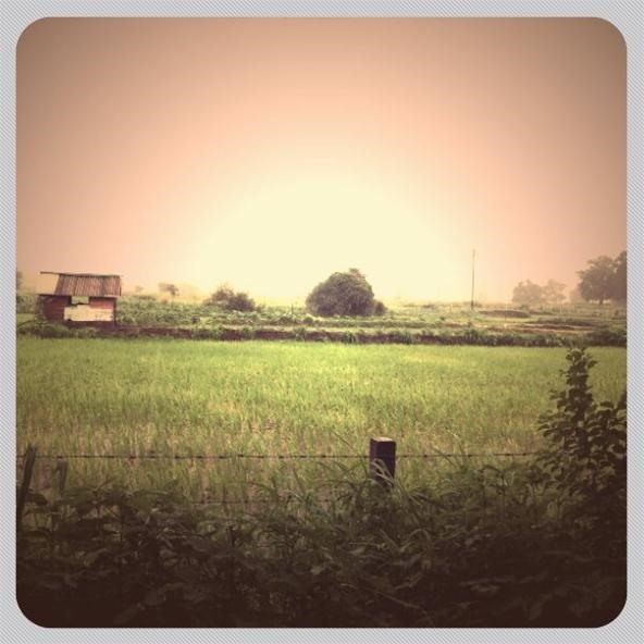 Filter Photography Challenge: Rice Farming