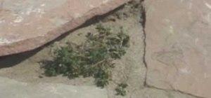 Install a flagstone path