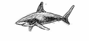Draw a simple shark (tiburón)