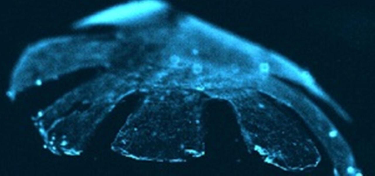 Half-Rat, Half-Silicone Cyborg Jellyfish