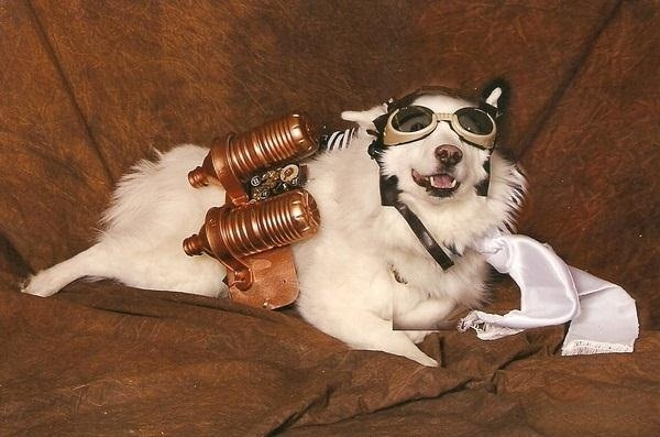 Goggles are a popular pet addition because you can actually buy goggles for your dog called  Doggles . I swear I didnu0027t make that up. & 8 Animals That Think Theyu0027re Steampunk (Plus Tips for Steampunking ...